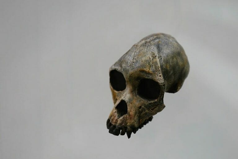 Old bone skull - painting miniatures with bone colors variety