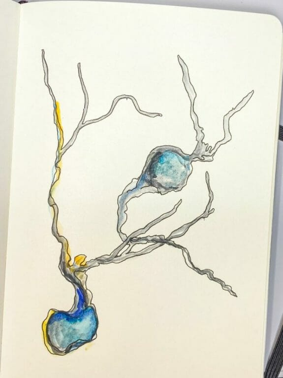 neuron doodles and art - drawing neurons and neuroscience art - the secret of complexity - a neuron grows from nothing - a drawing with pen and paper- nature must make sense - experimenting with color and pens