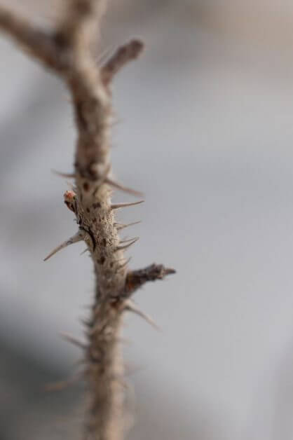 """""""Creative People and Anxiety"""": The Link Nobody Talks About - creativity and anxiety biological links - how and why to understand anxiety with your creativity - spines on branch"""