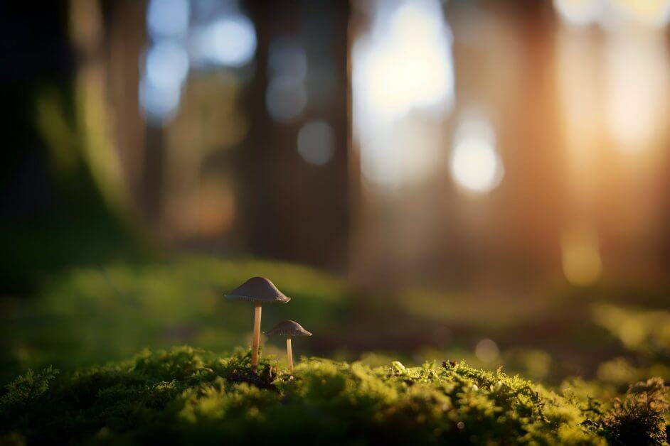 33 Reasons You Need To Take Photography, Seriously - personal reasons for photography - why photography - hobby photography -shallow focus photography of brown mushrooms