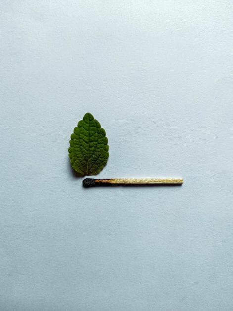 green leaf and burnt match on white background - Spell Casters with Attitude: Bards