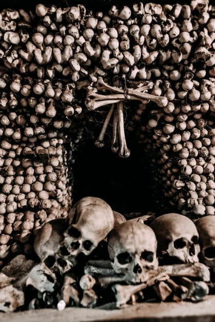 photo of skulls - bone reference image for painting miniatures realistically